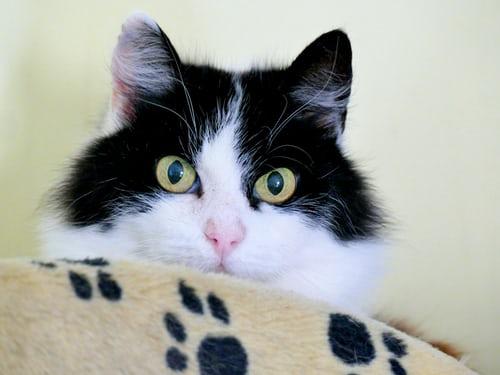 Nighttime: Sly the Cat  Image courtesy of Andrea Lightfoot  https://unsplash.com